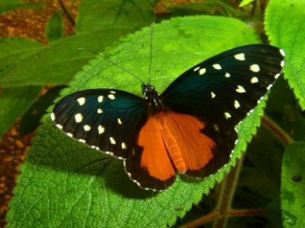 Butterflies on Costa Rica Nature Tours