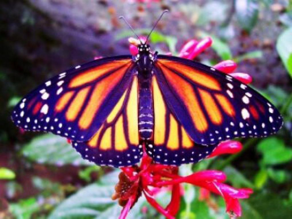 6 x1 Nature Combination Tour Costa Rica