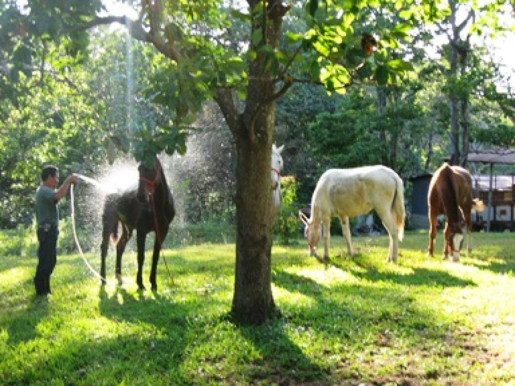 Washing Horses. Horse Trek Monteverde