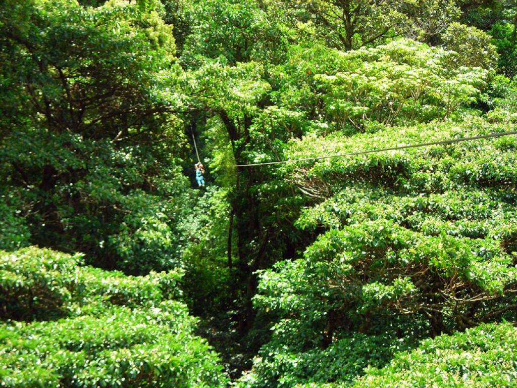 Adventura Canopy Tour Monteverde
