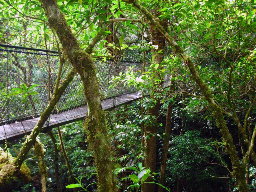 Hanging Bridges Adventura Canopy Monteverde