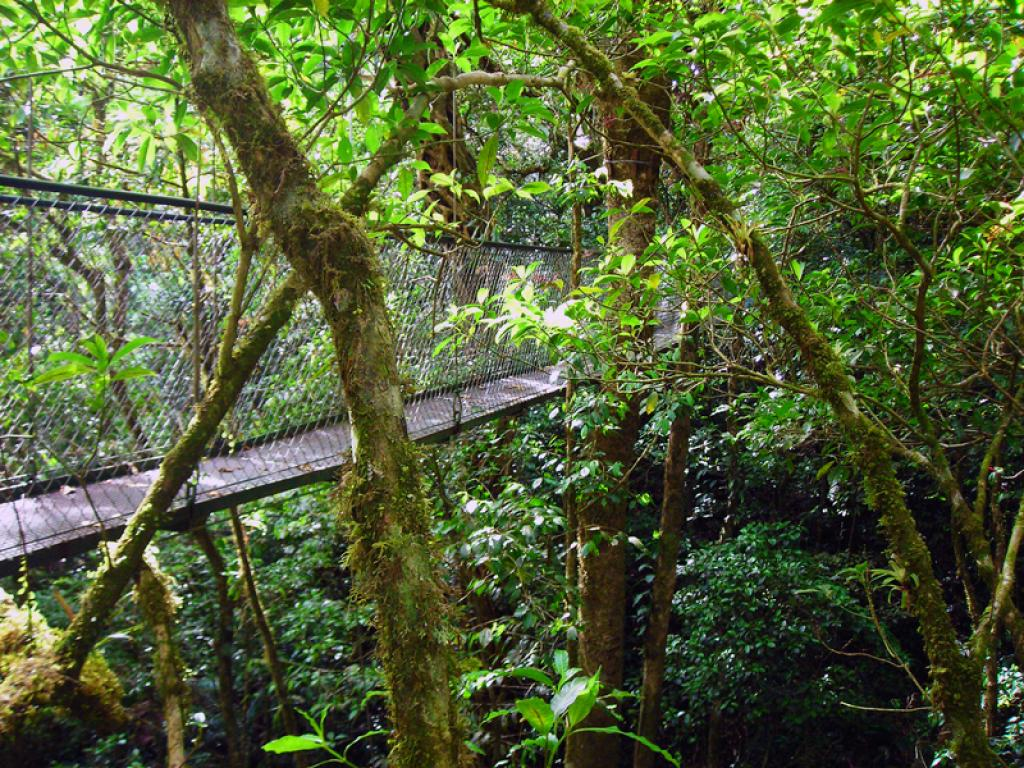 Hanging Bridges Adventura Canopy Monteverde