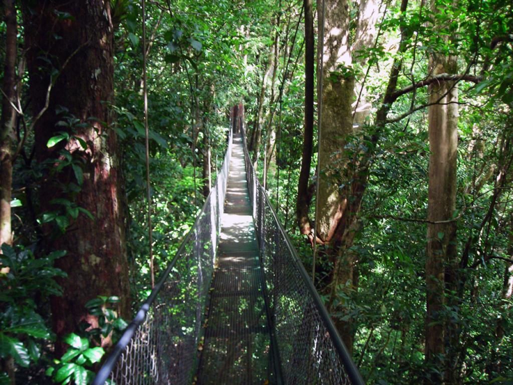 Adventura Canopy Suspension Bridges Monteverde