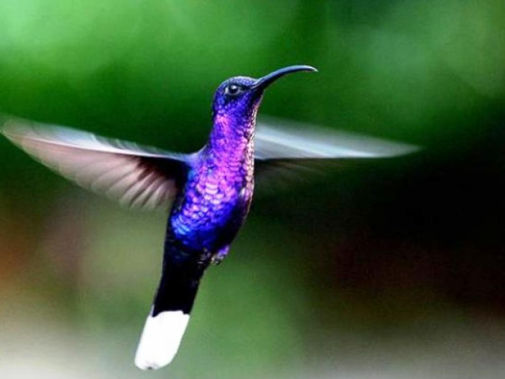Hummingbird Gardens Selvatura