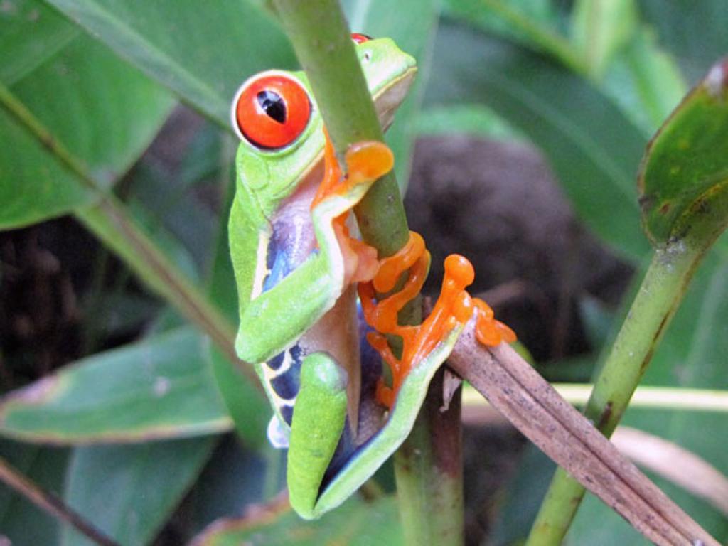 Frog Pond El Renario Monteverde