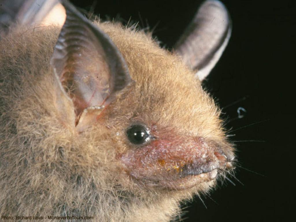 Monteverde Bat Jungle