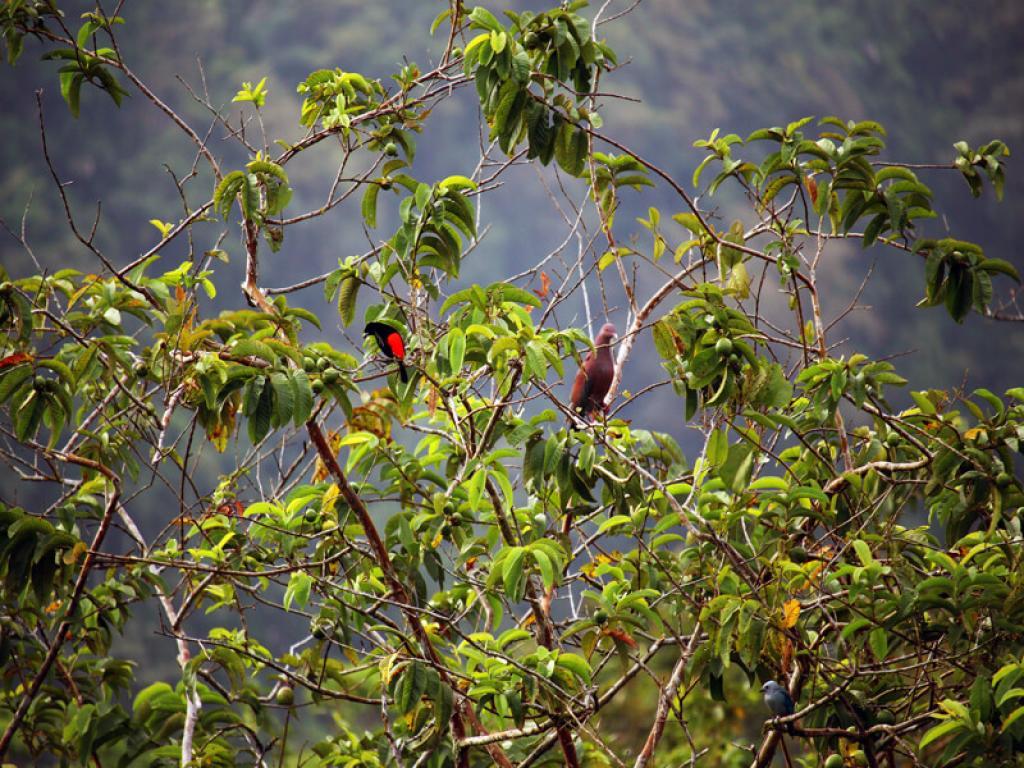 Bird-watching Arenal Volcano