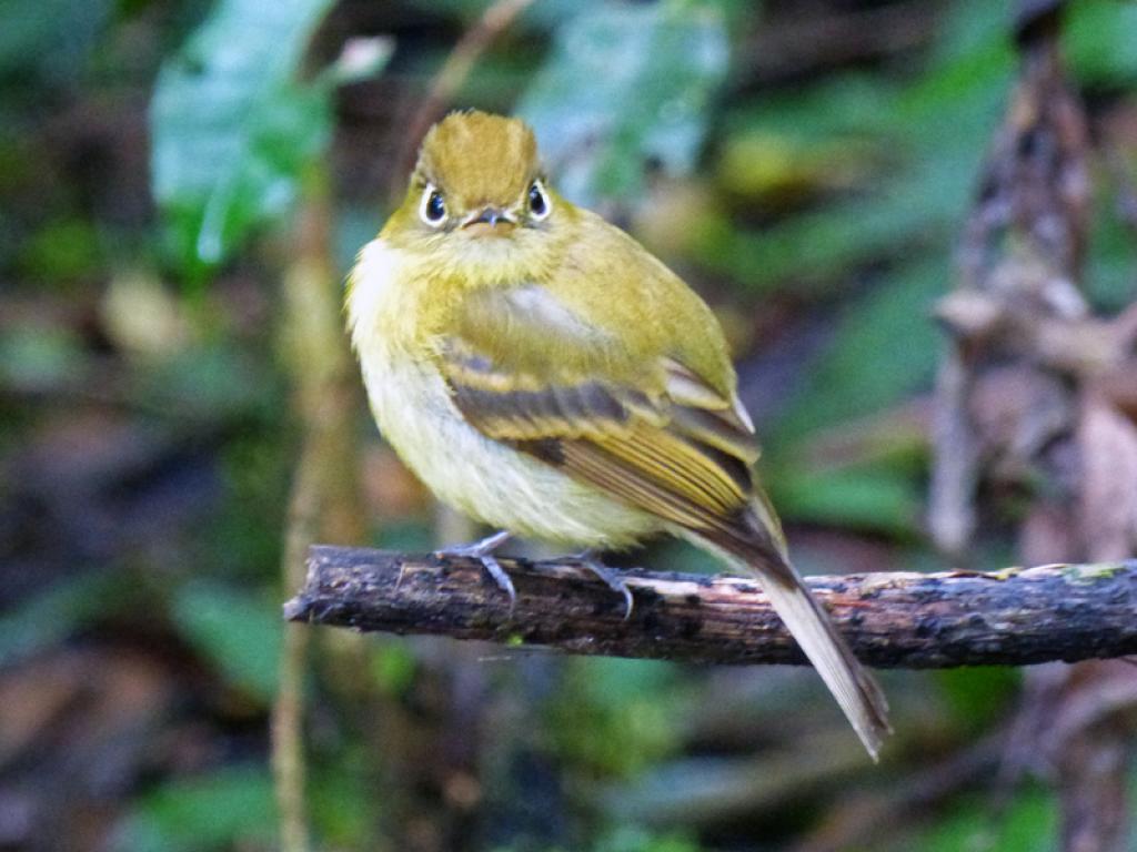 Bird Watching Tours in Monteverde Costa Rica