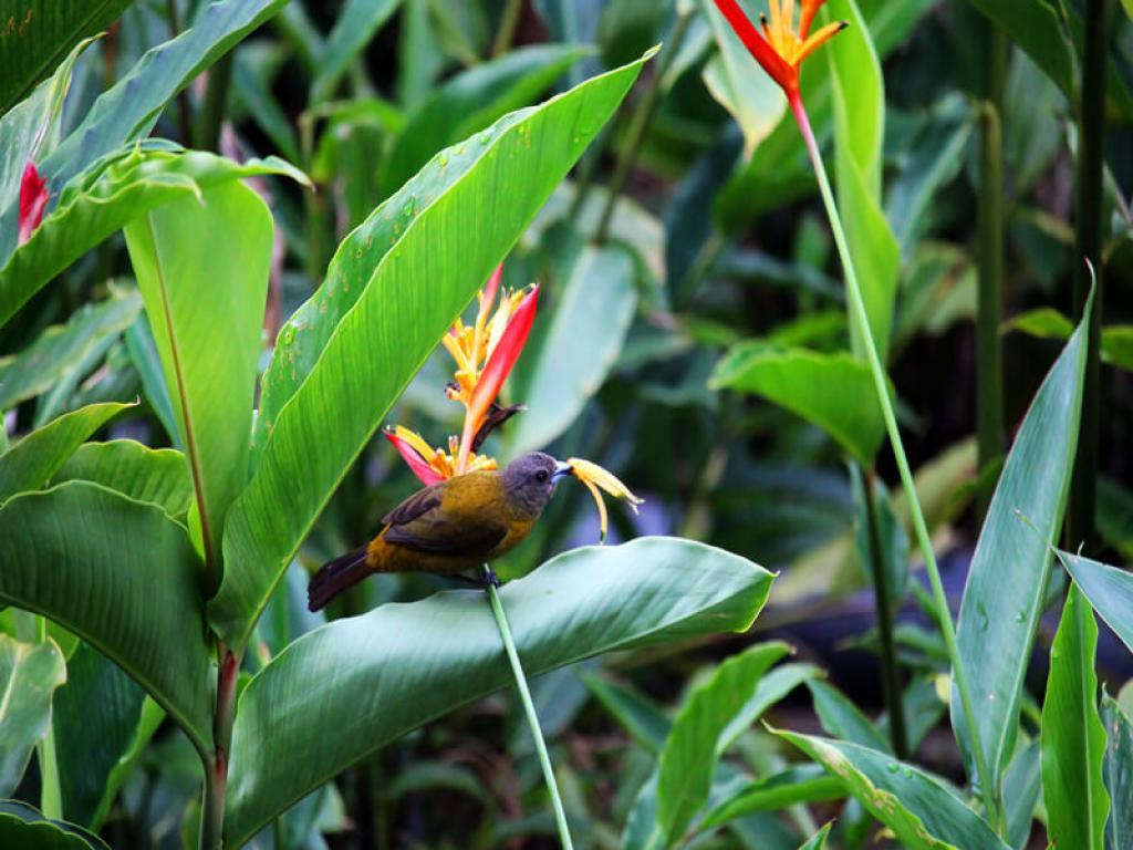 Birding Costa Rica