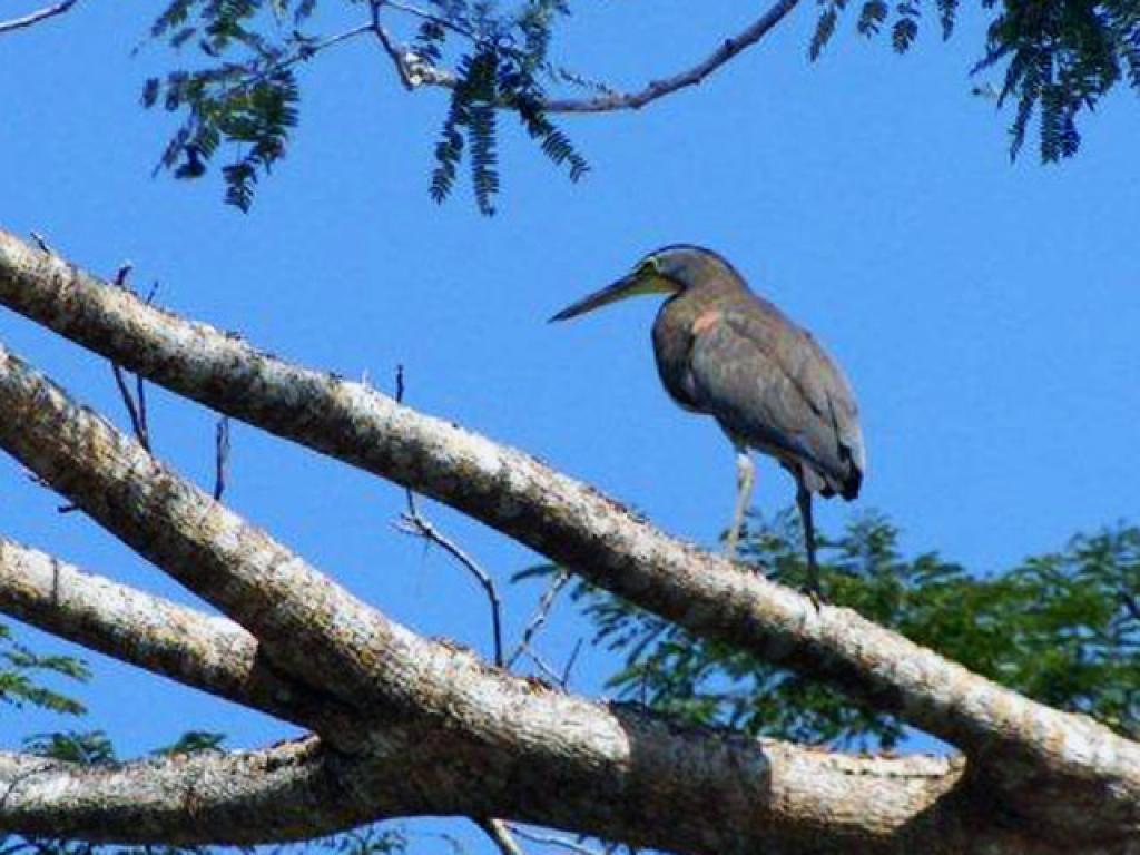 Birding Samara