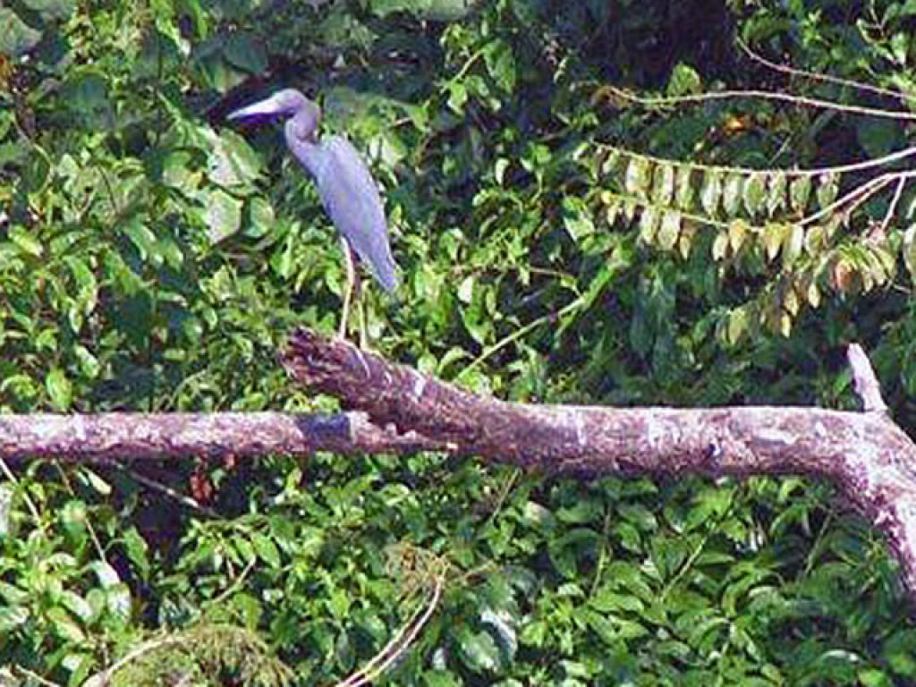 Birding Samara Costa Rica