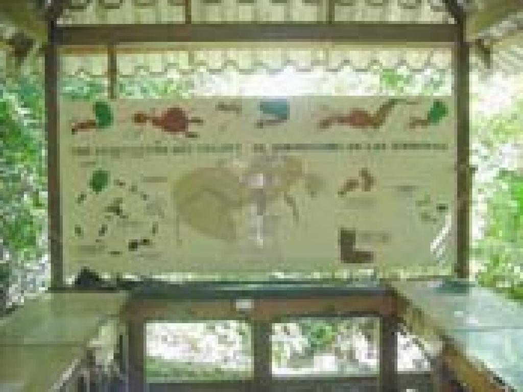 Leafcutter Ants at Monteverde Butterfly Garden