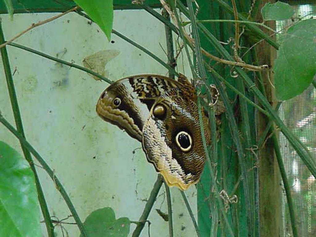 Butterfly Garden Tour