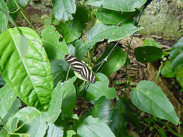 Monteverde Costa Rica Butterfly Garden