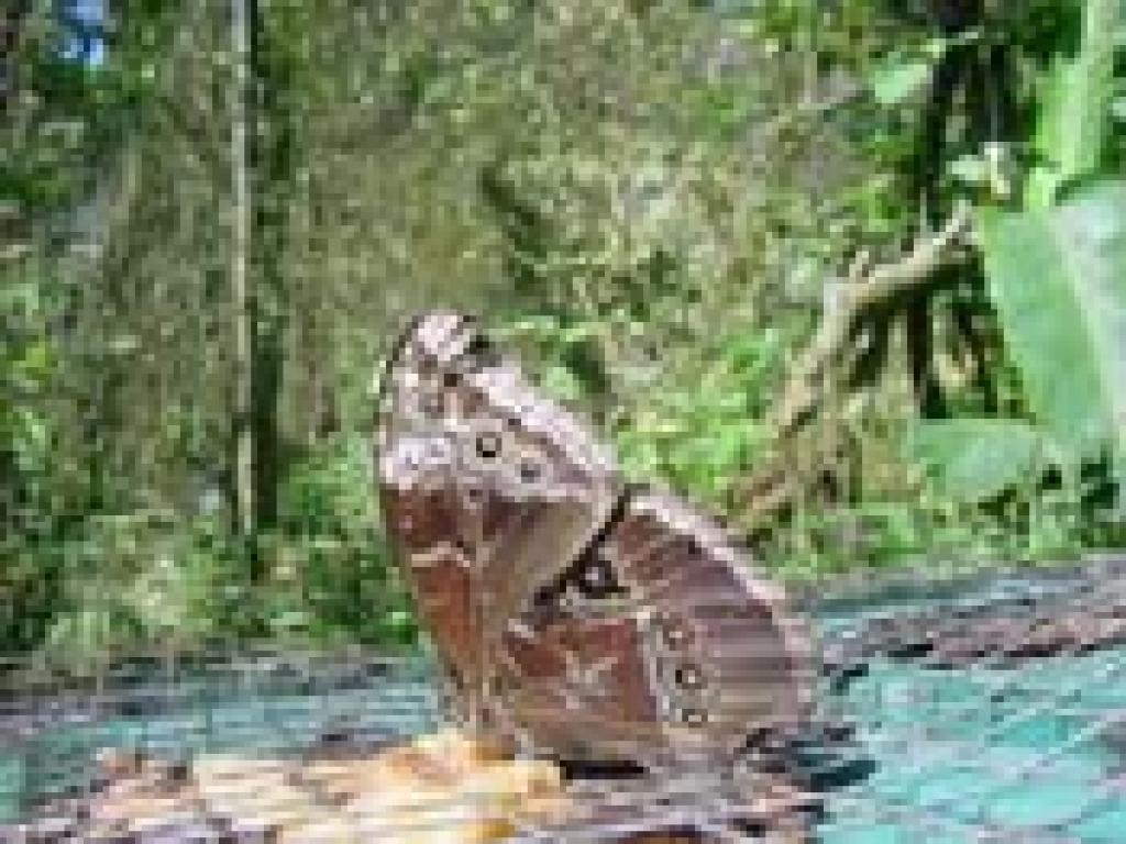 Monteverde Tours of Butterfly Garden