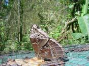 Monteverde Tours of Butterfly Garden