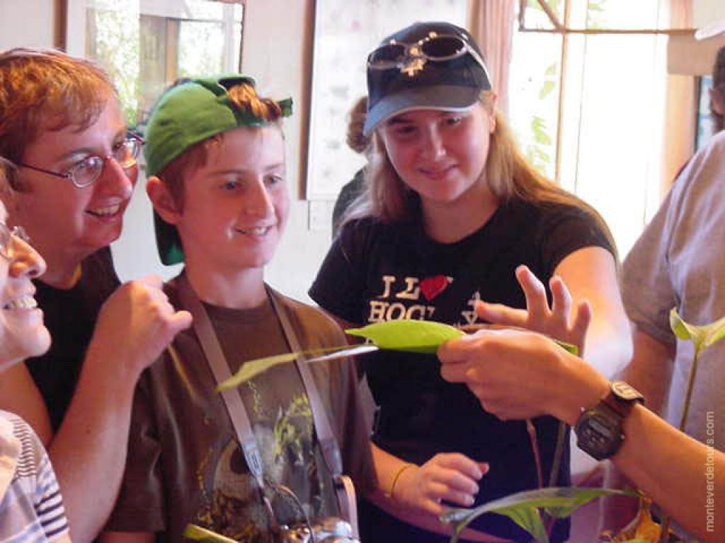 Monteverde Tours and Activities | Monteverde Buttefly Tours | Monteverde Butterfly Garden