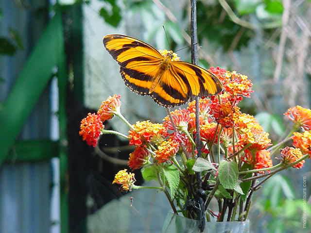 Monteverde Butterfly Garden
