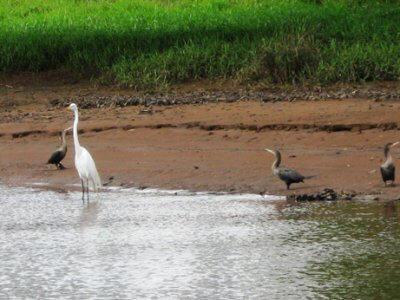 Beautiful Birds Cano Negro Costa Rica