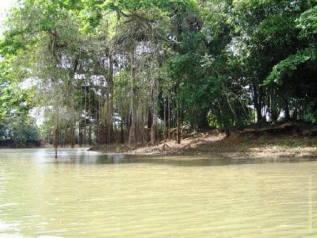Rio Frio Cano Negro Costa Rica