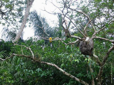 Cano Negro Wildlife Costa Rica