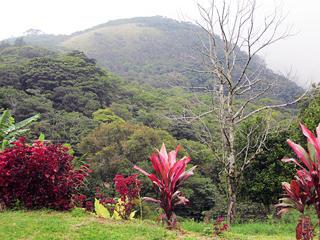 Cabinas Belcruz Monteverde Views