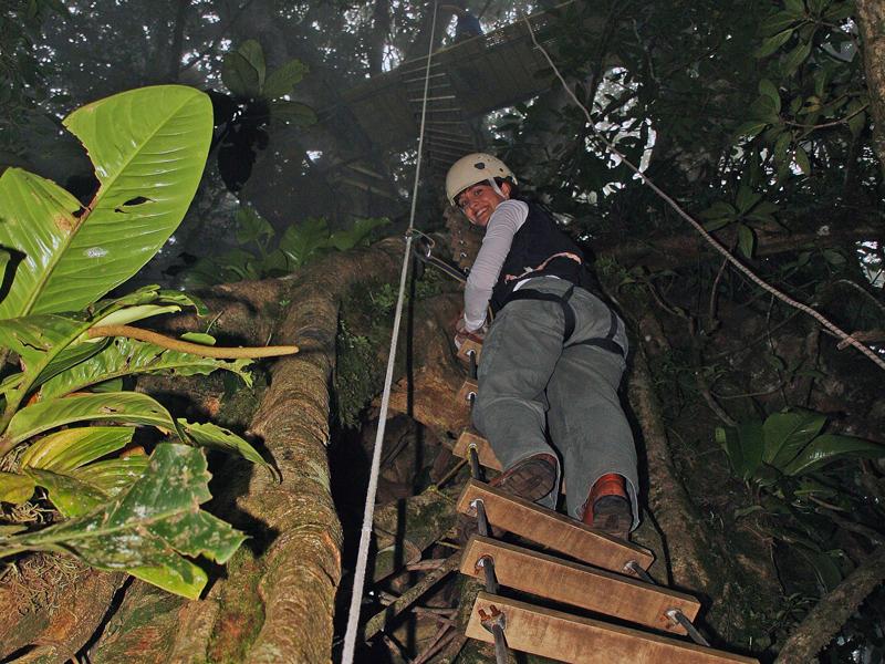 Climbing to Platform Original Canopy Tour Monteverde