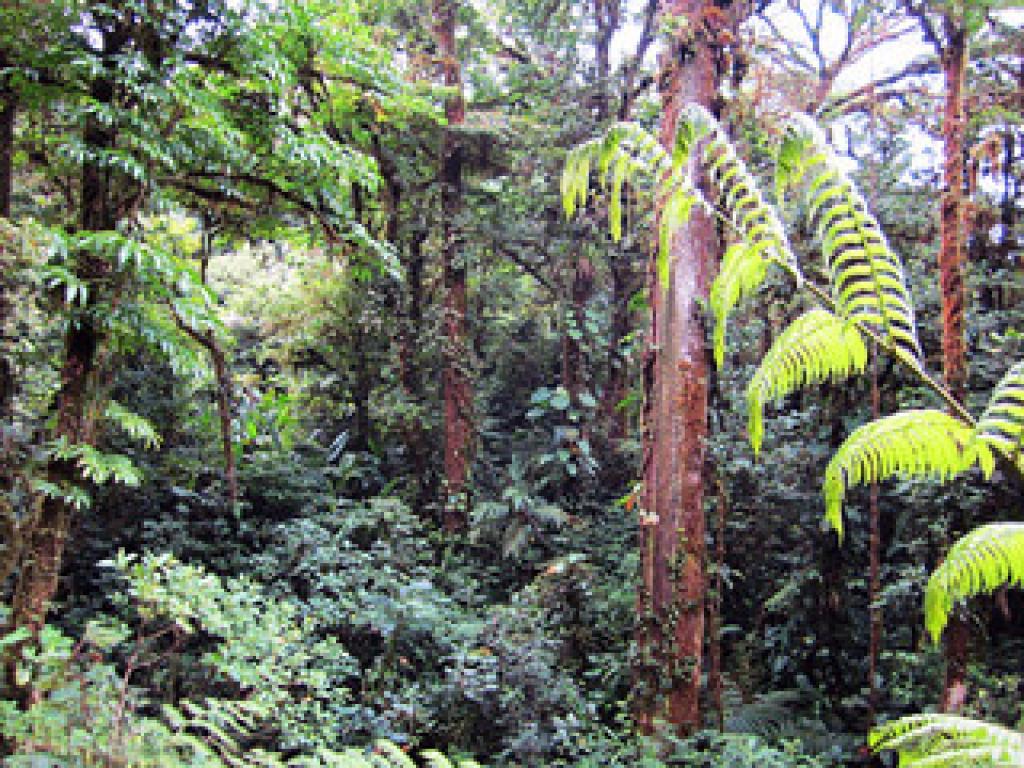 Cloud Forest Trees Monteverde