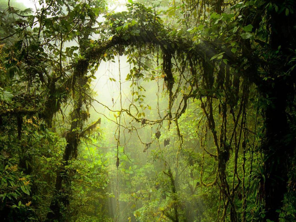 Cloud Forest Monteverde Costa Rica