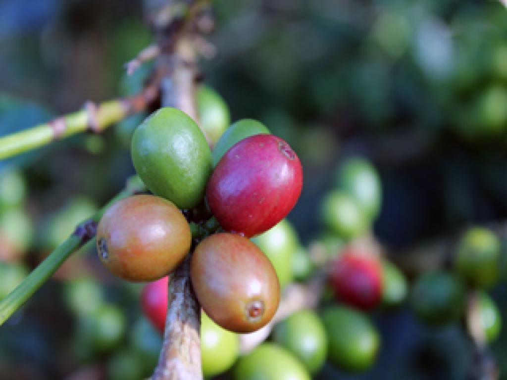 coffe tour in Costa Rica