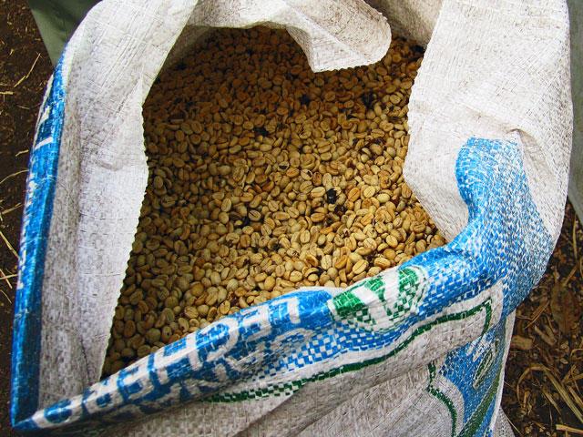 Coffee Production Monteverde
