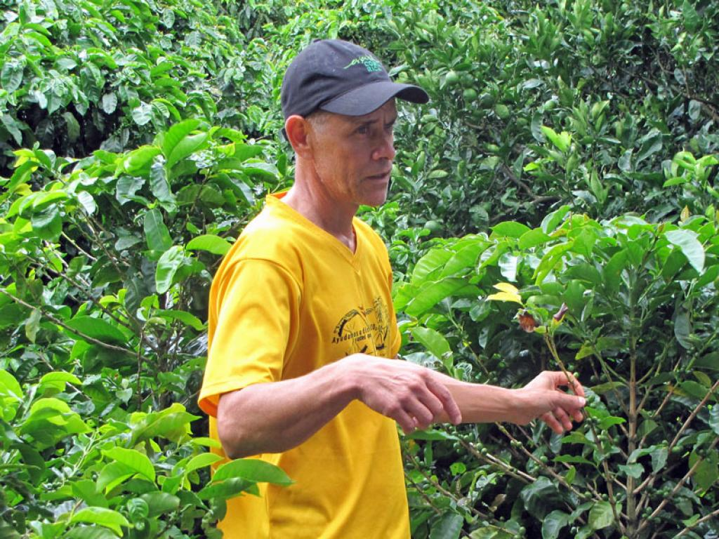 Coffee Planation at LIFE Monteverde
