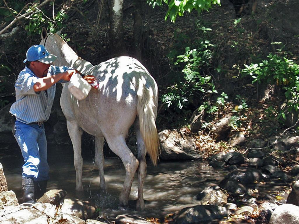 cooling down the horses all day cowboy ride monteverde
