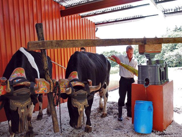 Sugar Making Tour Monteverde