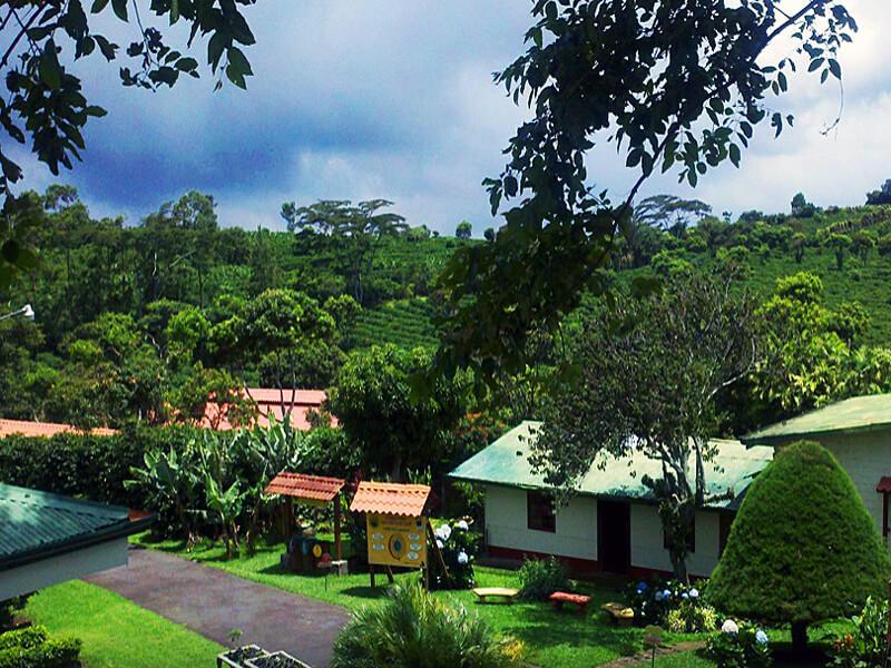 Doka Coffee Plantation Costa Rica
