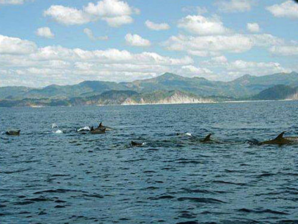 Costa Rica Dolphins