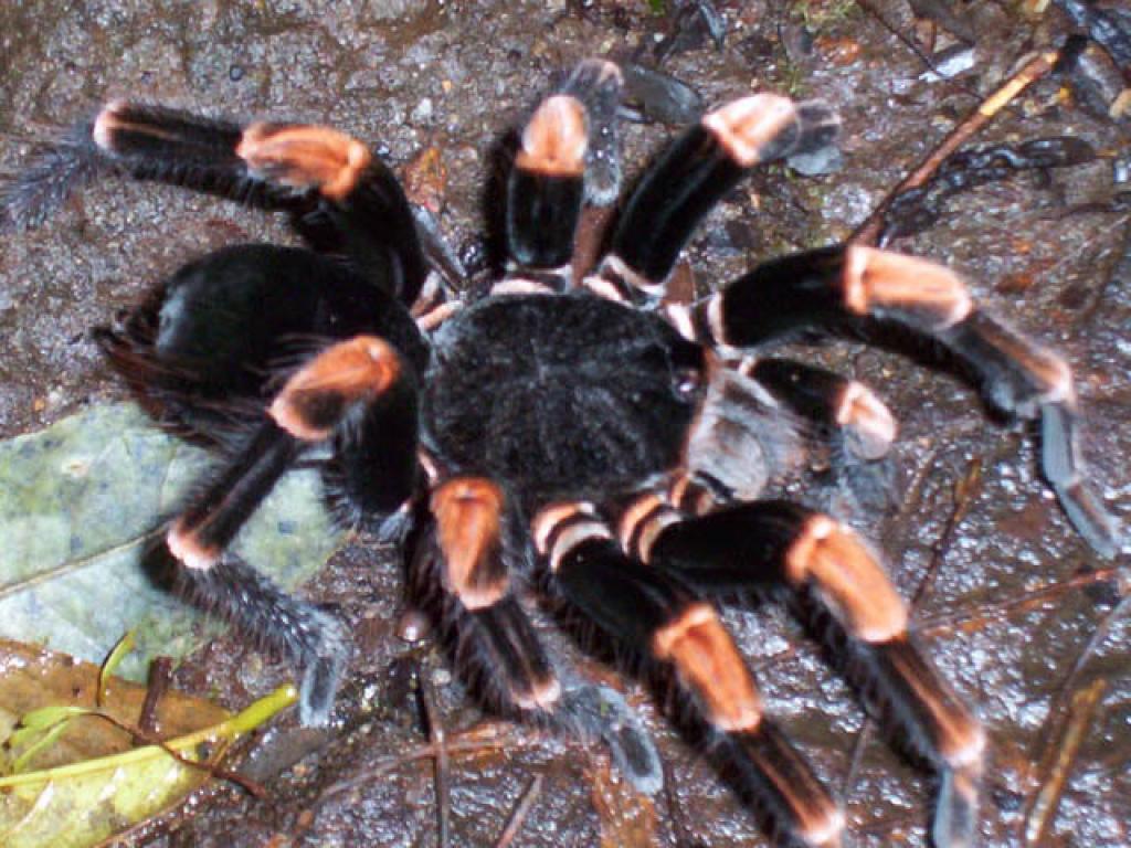 Creatures Monteverde Night Hike