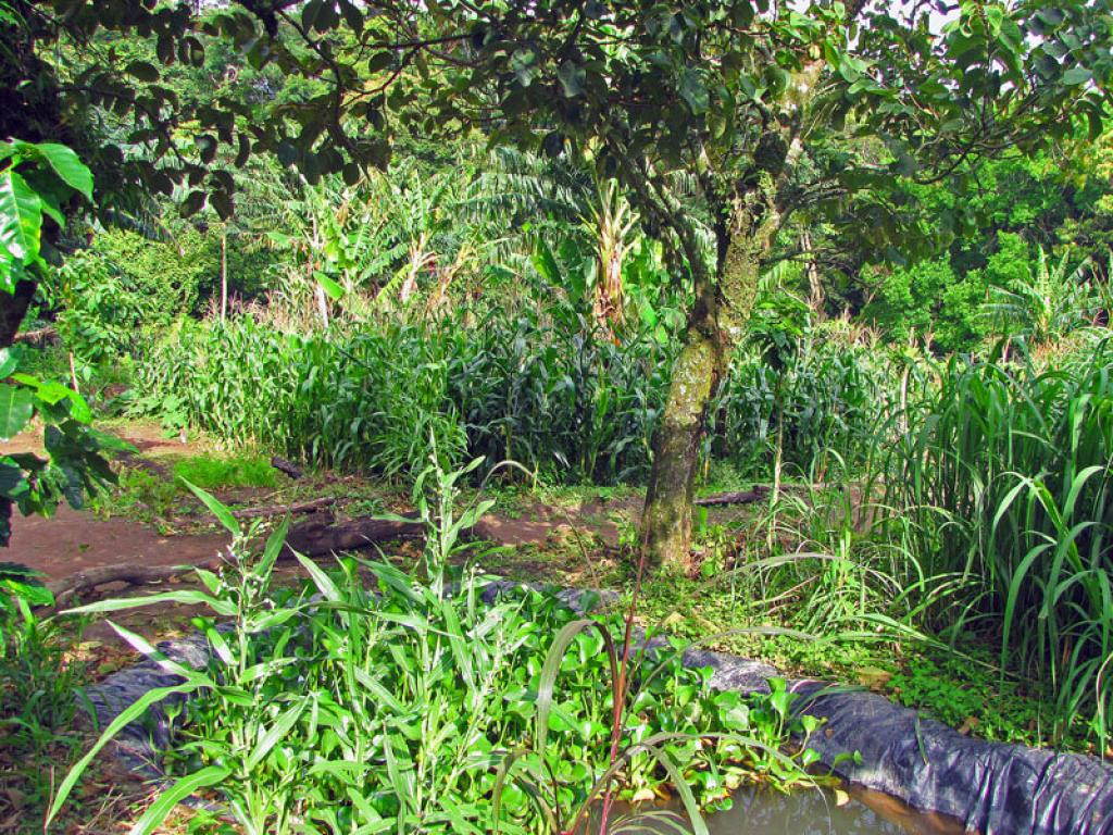 Sustainable Farming LIFE Monteverde Costa Rica