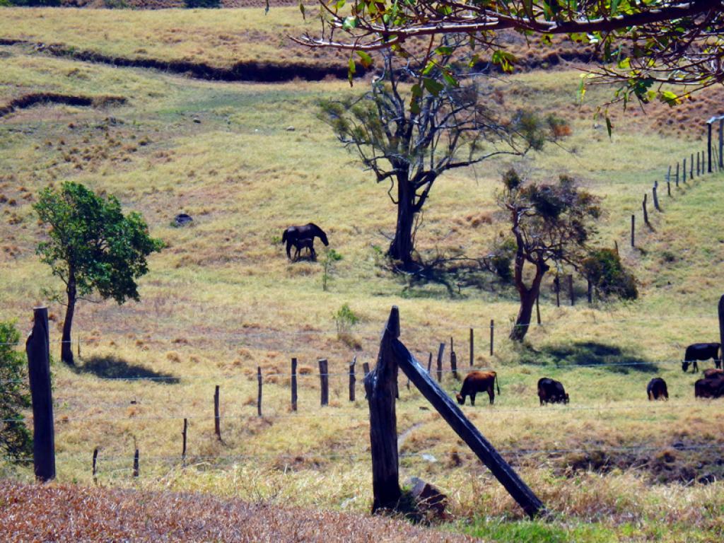 Farms Views on Horseback Costa Rica