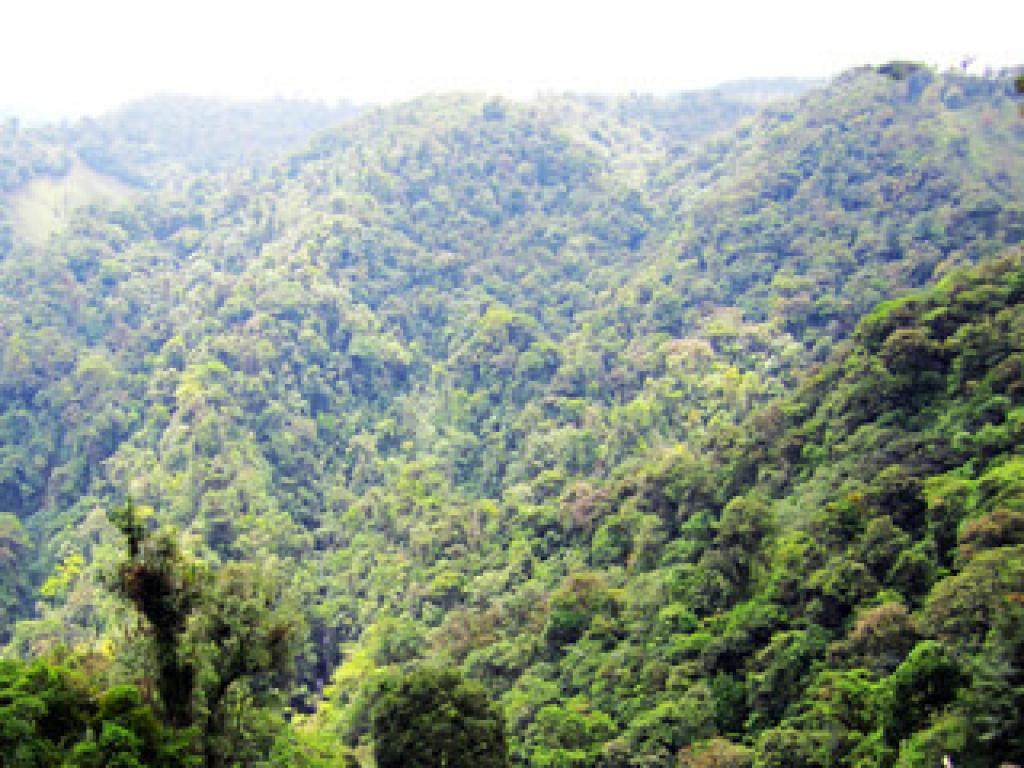 Forests in Monteverde