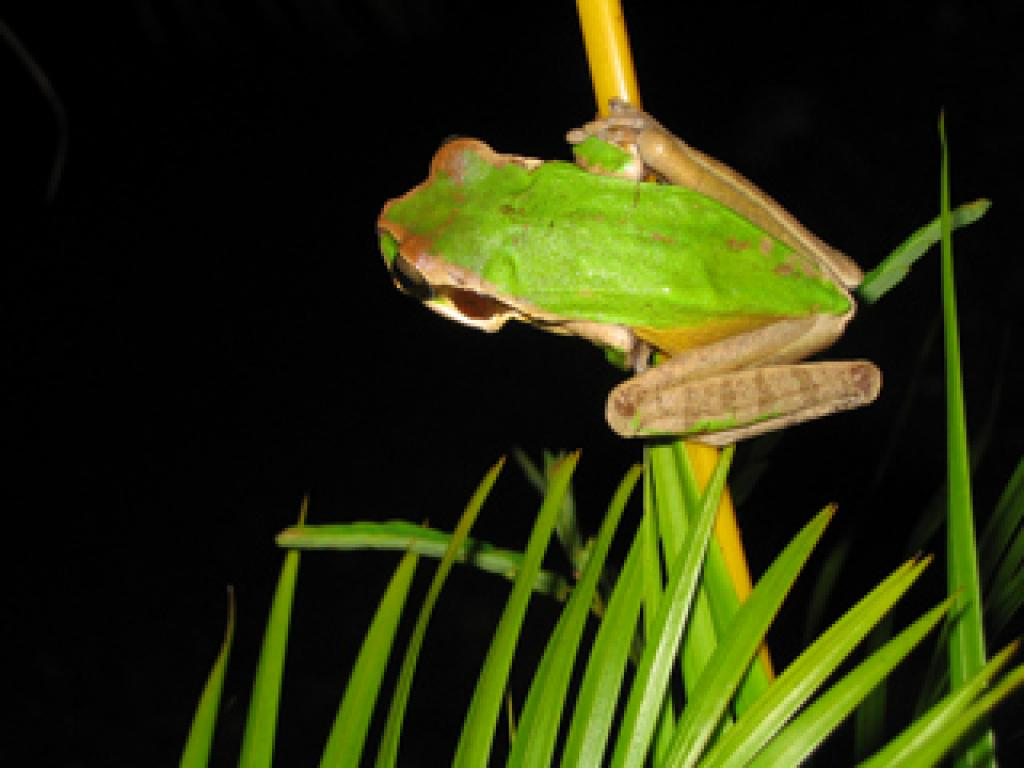 Creatures at the Monteverde NIght Tour
