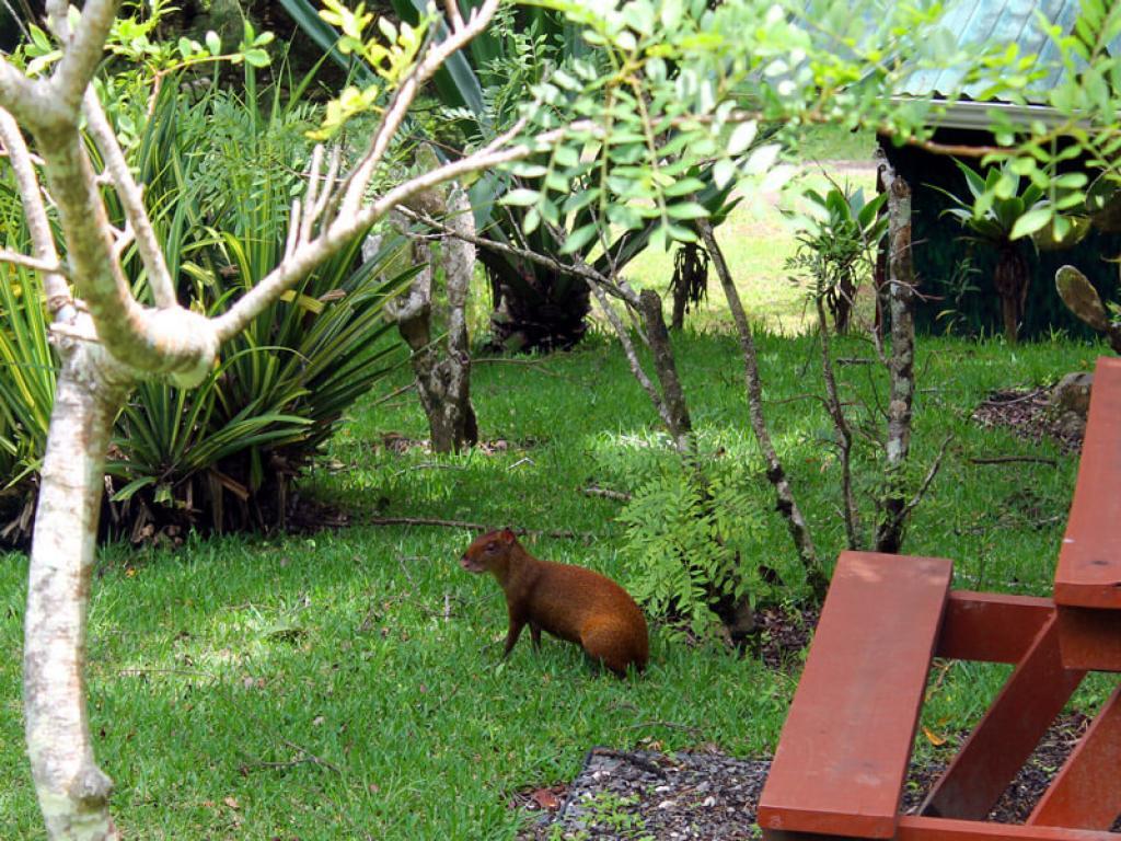 Grounds at Cabanas Los Pinos