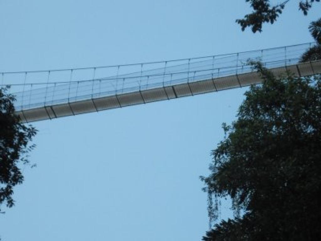 Suspended Bridge Tour in Arenal