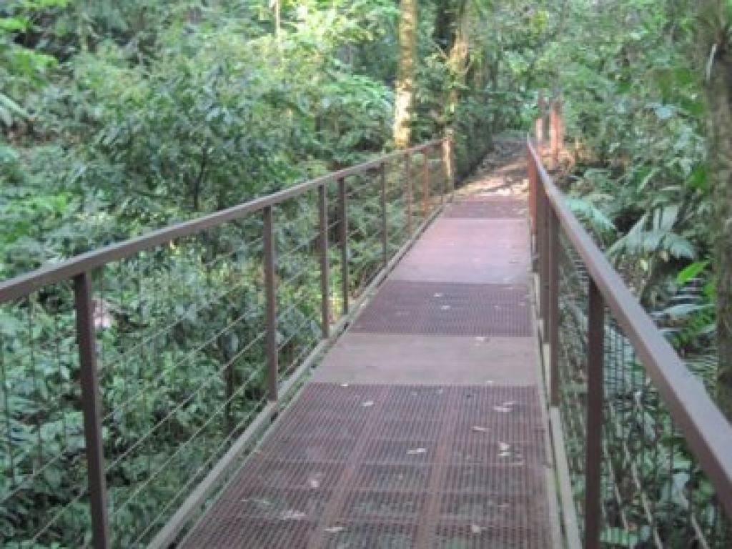 Suspended Bridges Arenal Costa Rica