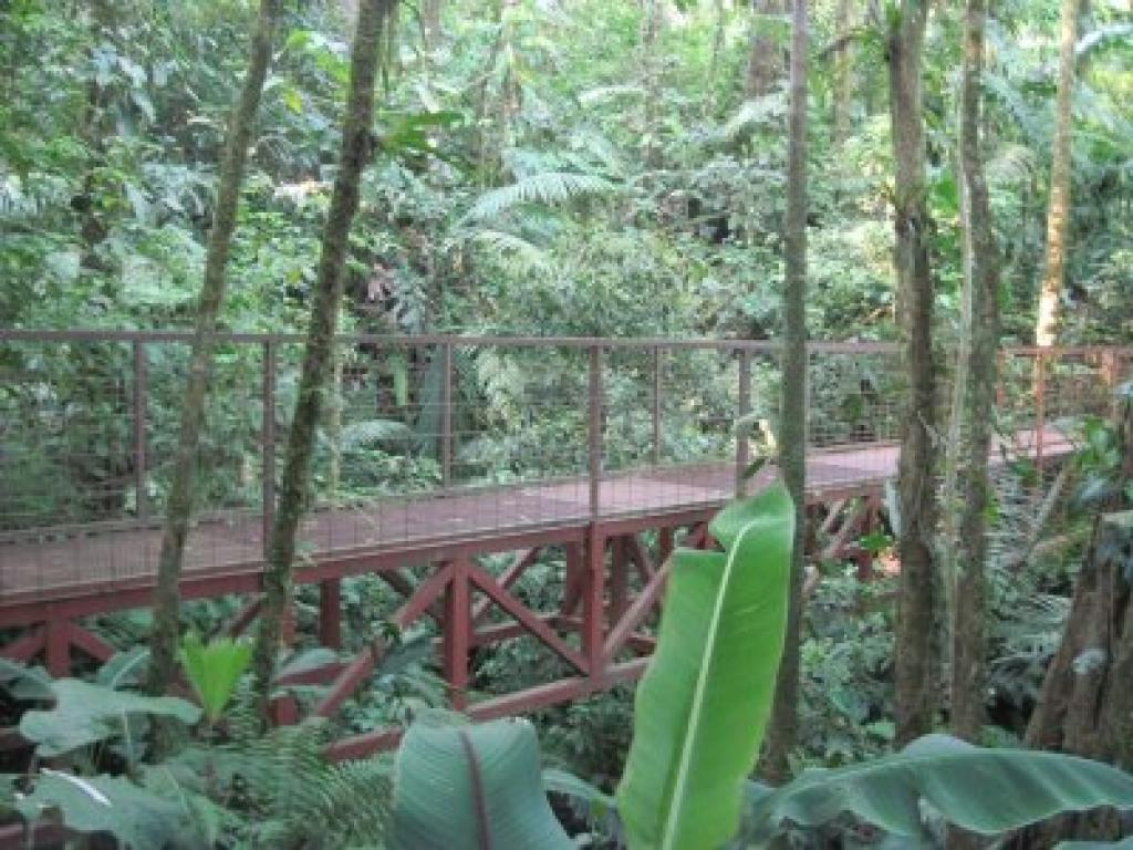 Arenal Hanging Bridge Tour