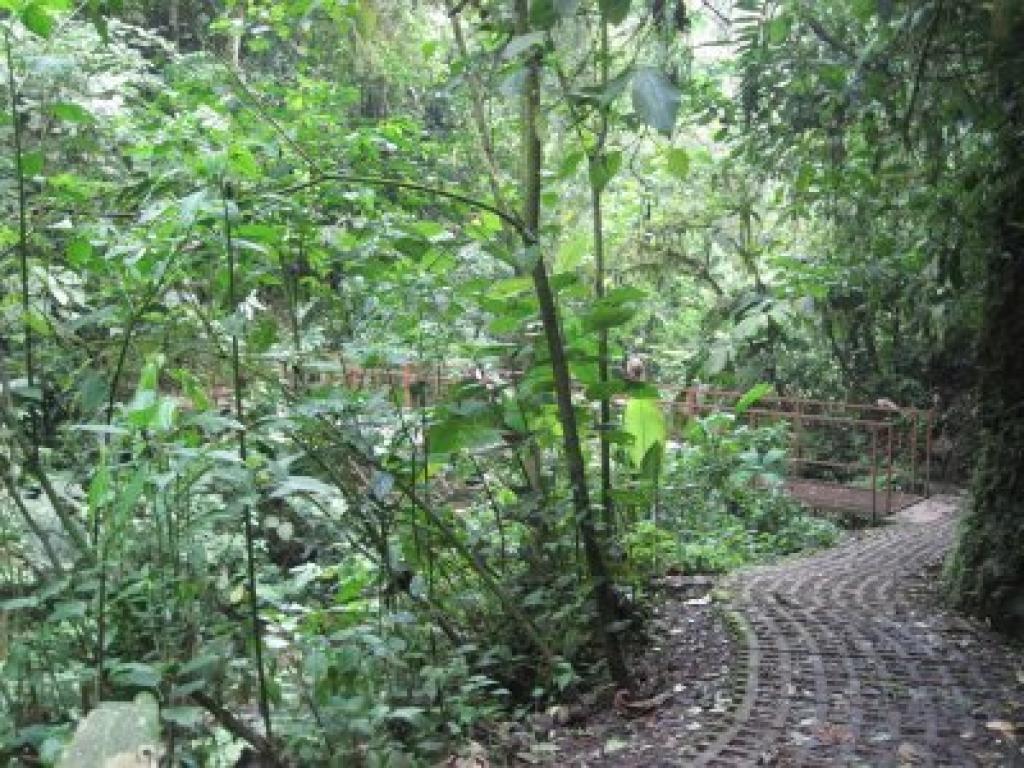 Trails Hanging Bridges Arenal