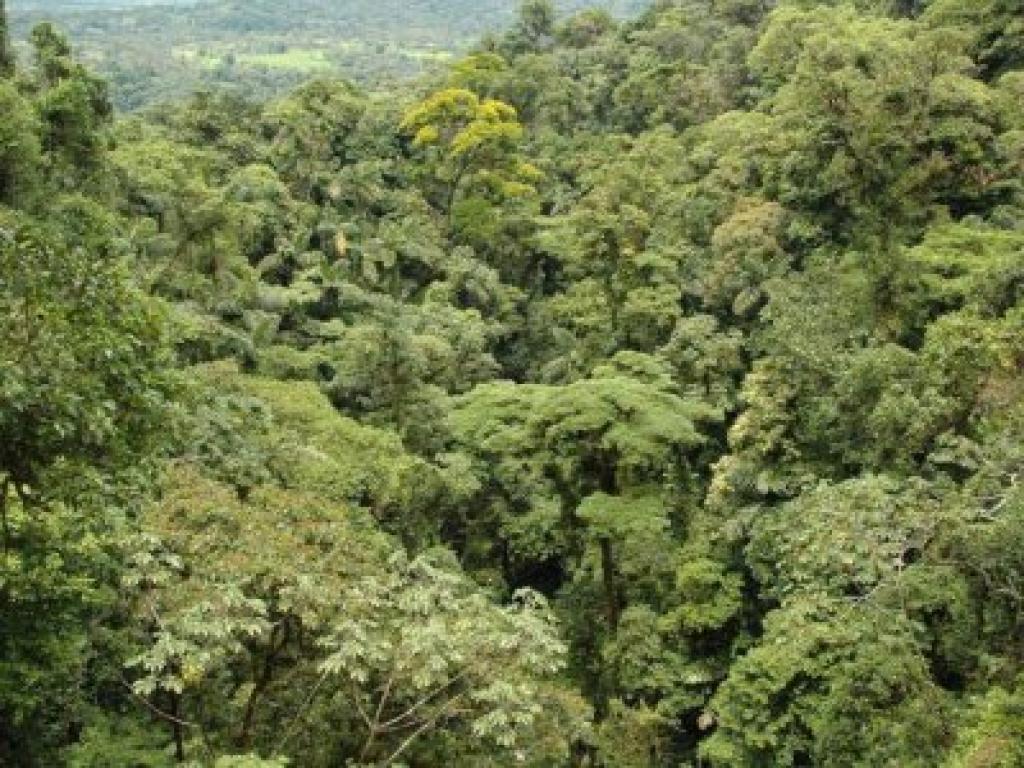 Rainfforest Arenal Hanging Bridges