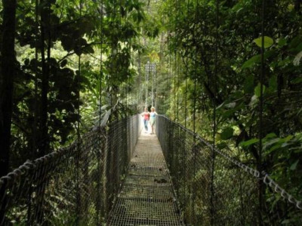 Hanging Bridges Arenal One Day Tour from San Jose