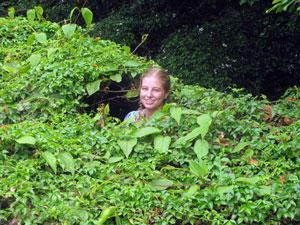 Hiding in the Vegetation Eden Fall Monteverde
