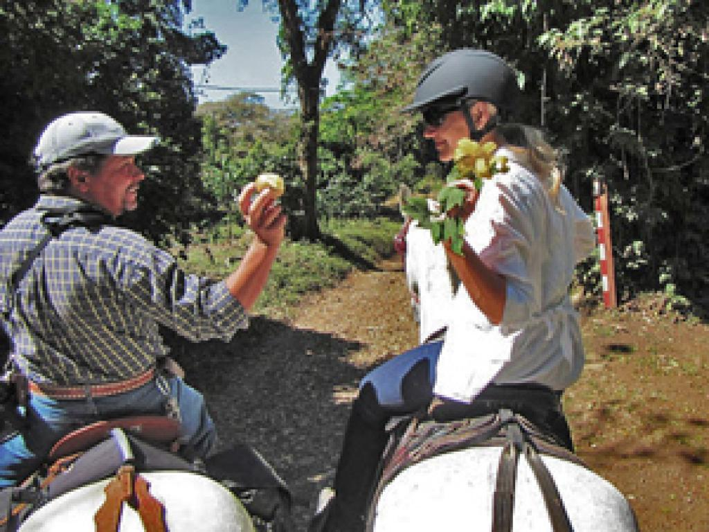 4 Hour Tour Horse Riding Monteverde